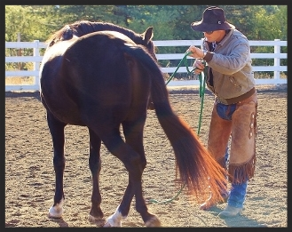 horse moving hindquarters chris ellsworth horsemanship