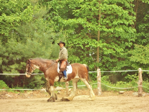 chris dressage clydestale (500x374).jpg