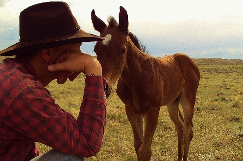 chris with foal (500x331).jpg