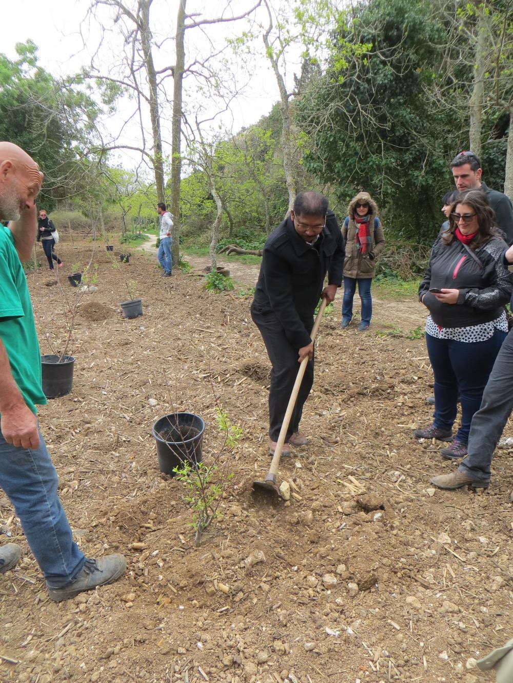 Tree Planting LEAF NOM Malta 2016 (6).JPG