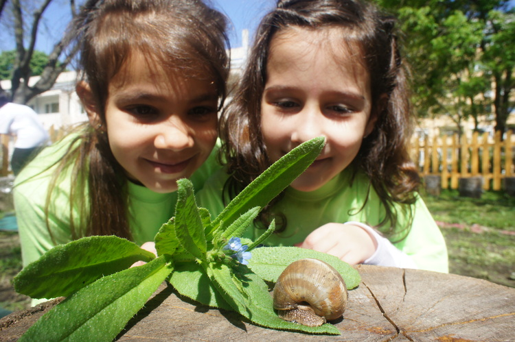 Perfect synergy of FEE environmental educational programmes in Bulgaria