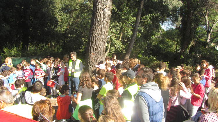 Tree Planting and Teachers' Environmental Seminar at Skiathos Island, Greece