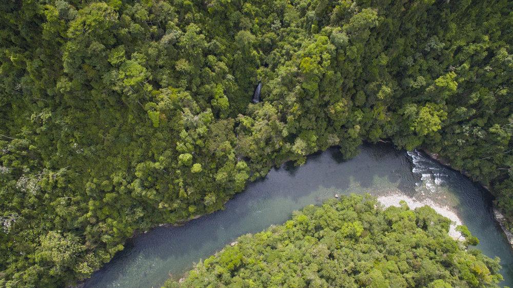 Unas de las selvas la mas convervada y biodiversa de Antioquia se encuentran por las orrillas del Rio Samana Jules Domine.jpg