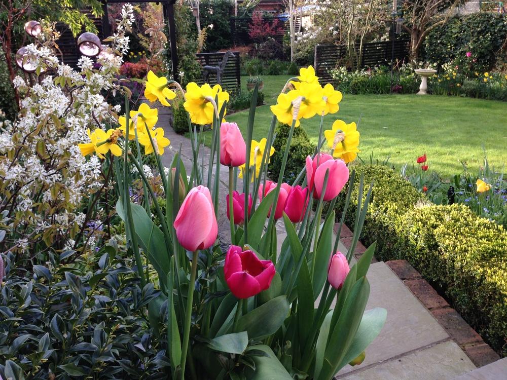 garden April 2016 b.jpg