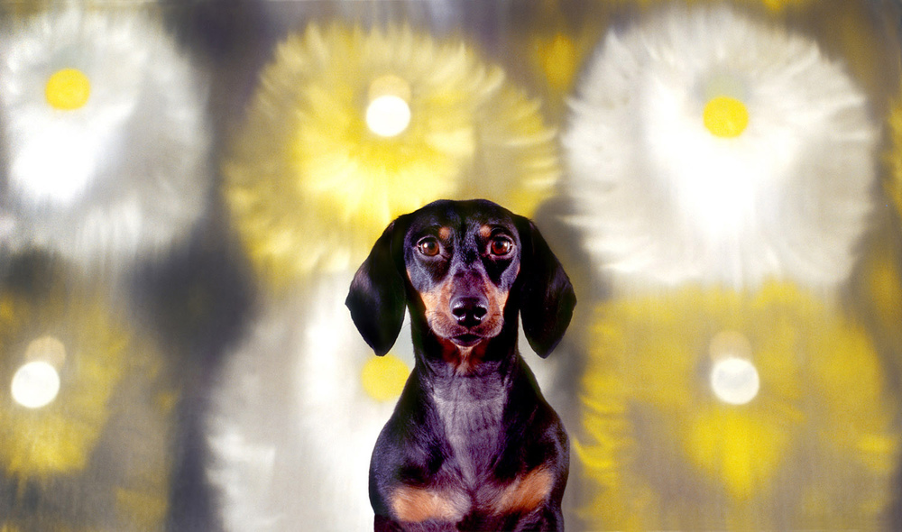 Minnie & painting by       Ross Bleckner