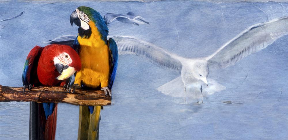 Maggie & Gabby & painting by Steve Laposta