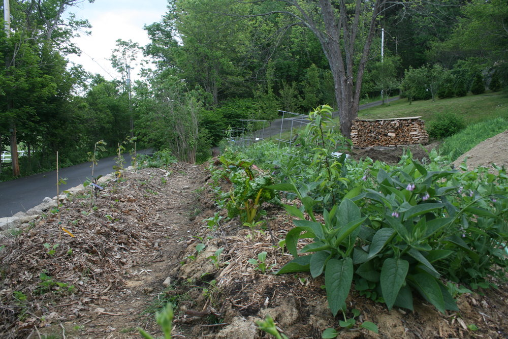 June 2016  Little twig trees and shrubs getting lost in the Annuals and herbaceous perennials.