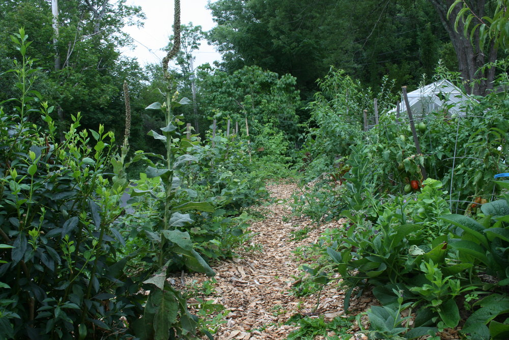 July 2017  Annuals and perennials still more impressive than the shrubs and trees. Our green house in its old location, put there while the construction of the root cellar was still happening.