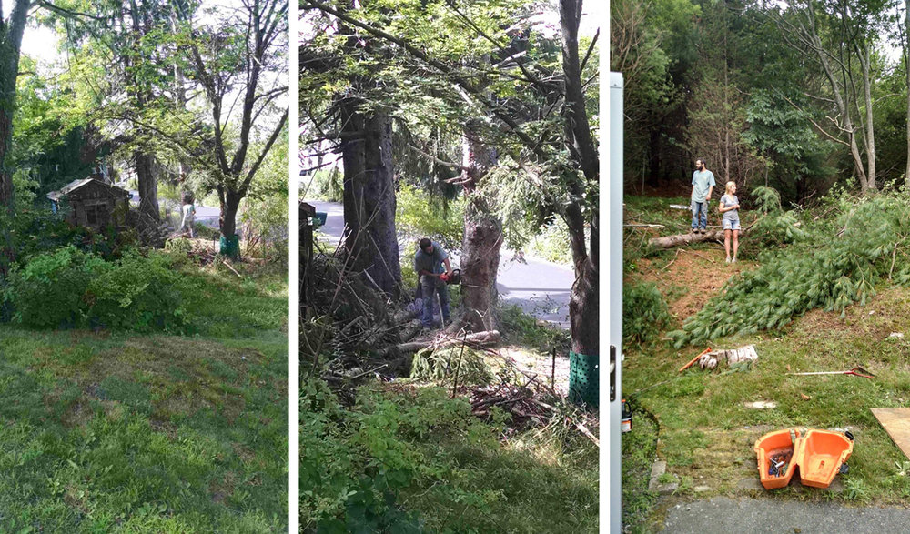 August 2015  Cutting down the spruces (image 1 and 2) me and johnny surveying part of the front slope as we start clearing.