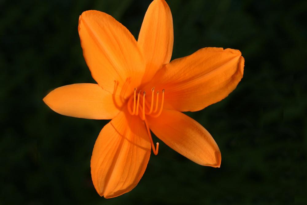 Orange 5.jpg