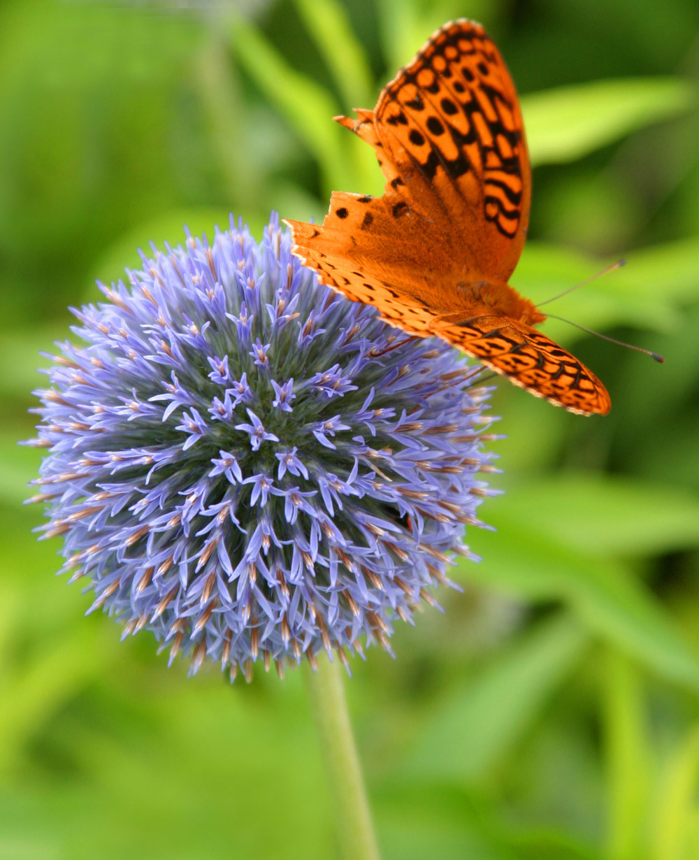 butterfly on purple.jpg
