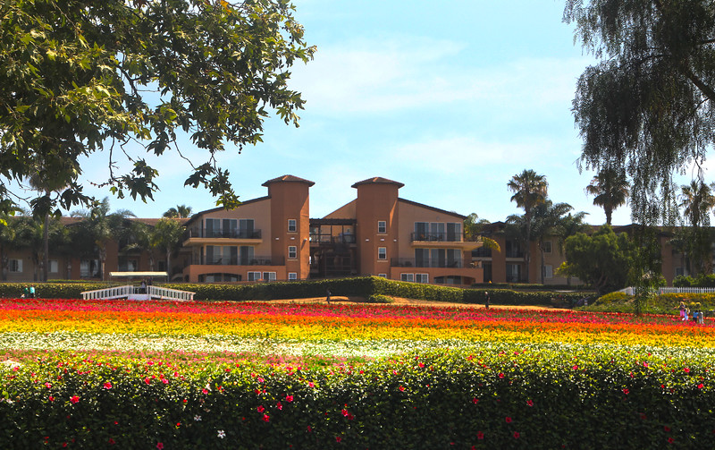 Grand Pacific Palisades Resort, Carlsbad California, View on Property from Flower Fields-L.jpg