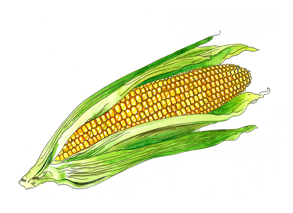 corn color.jpg
