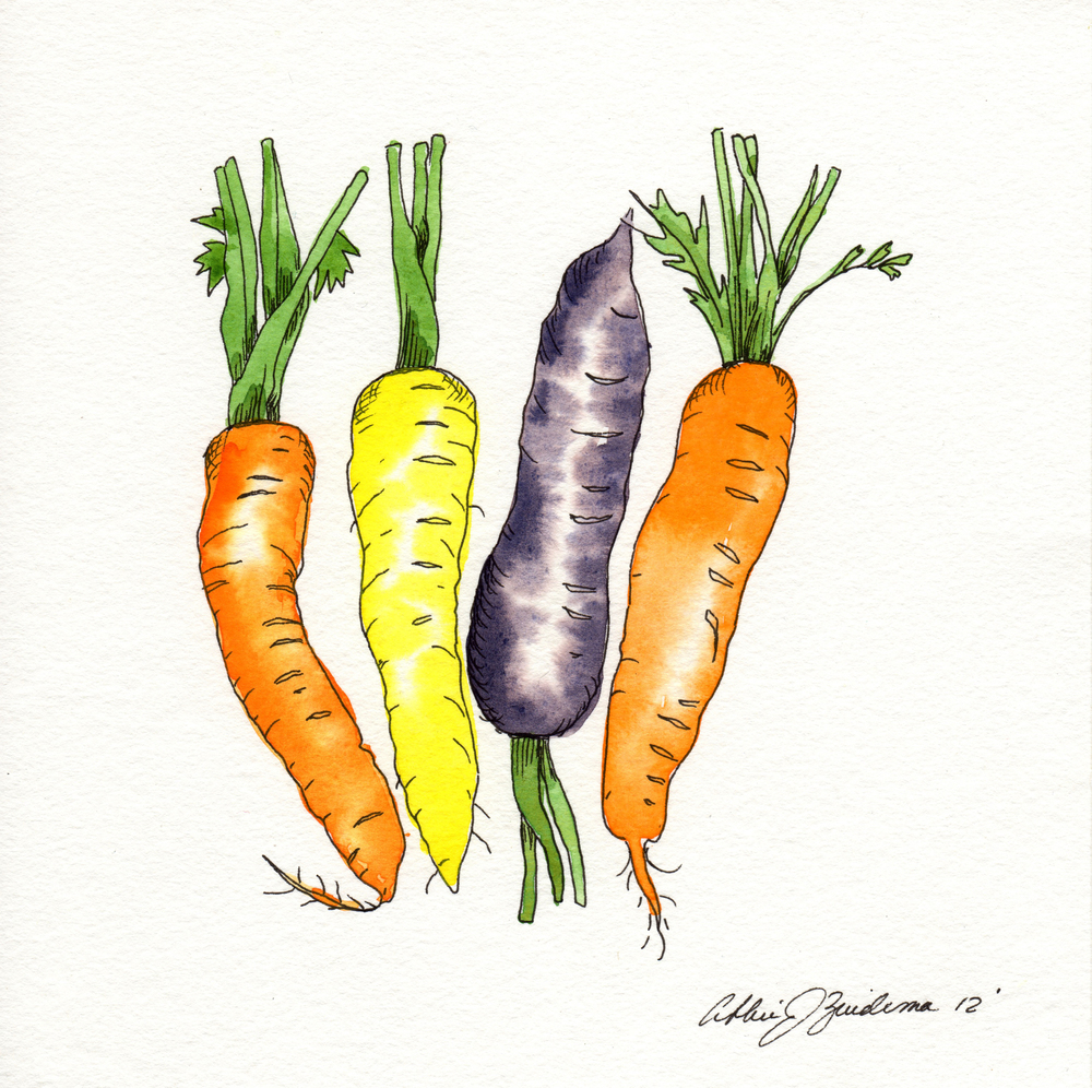 carrots multi colored short stems.jpg
