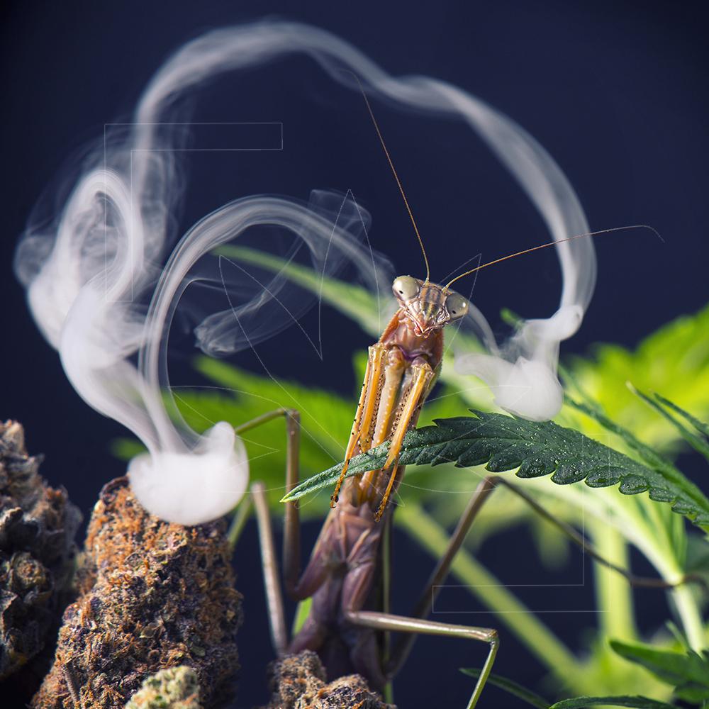 00081 Mantis Clouds branded.jpg