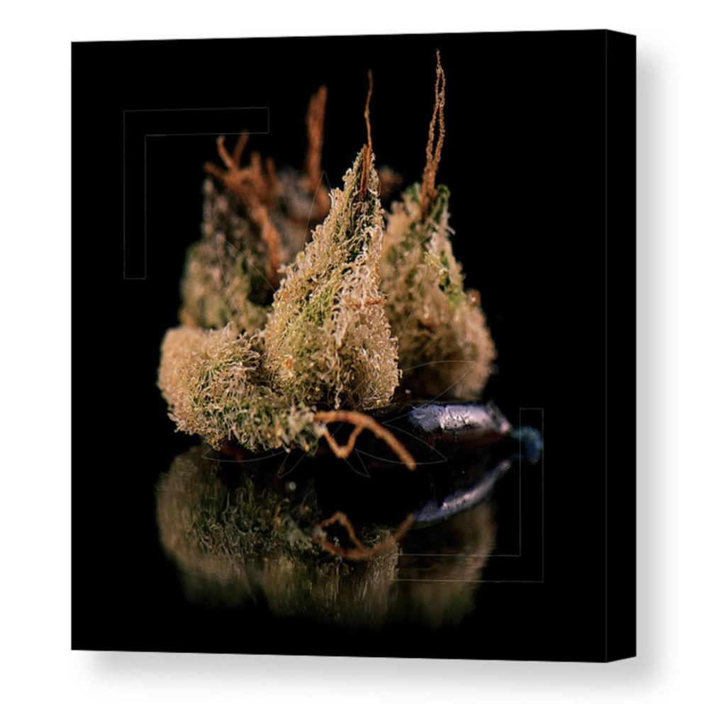 """Black Calyx"" Canvas / $70 - $125"