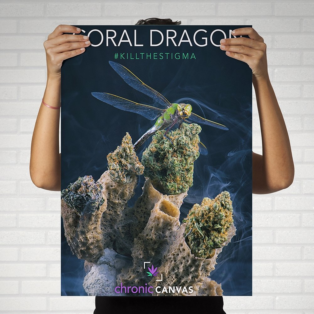 Coral Dragon Poster / $25 - $35