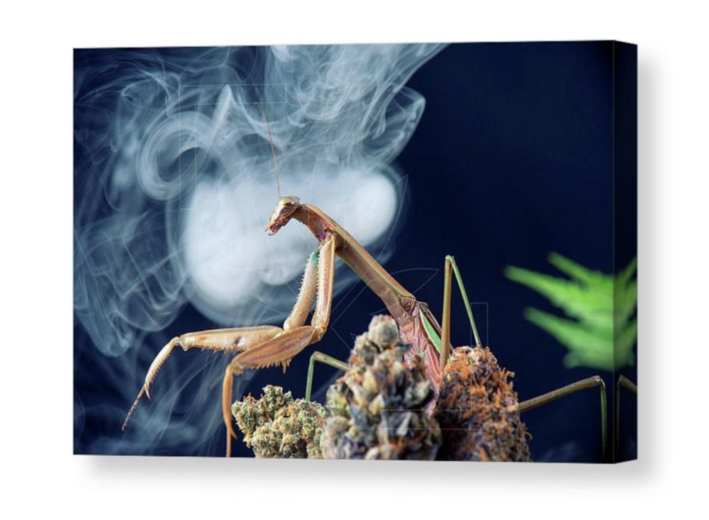 """""""Unleash the Mantis"""" Canvas / $125 - $250"""