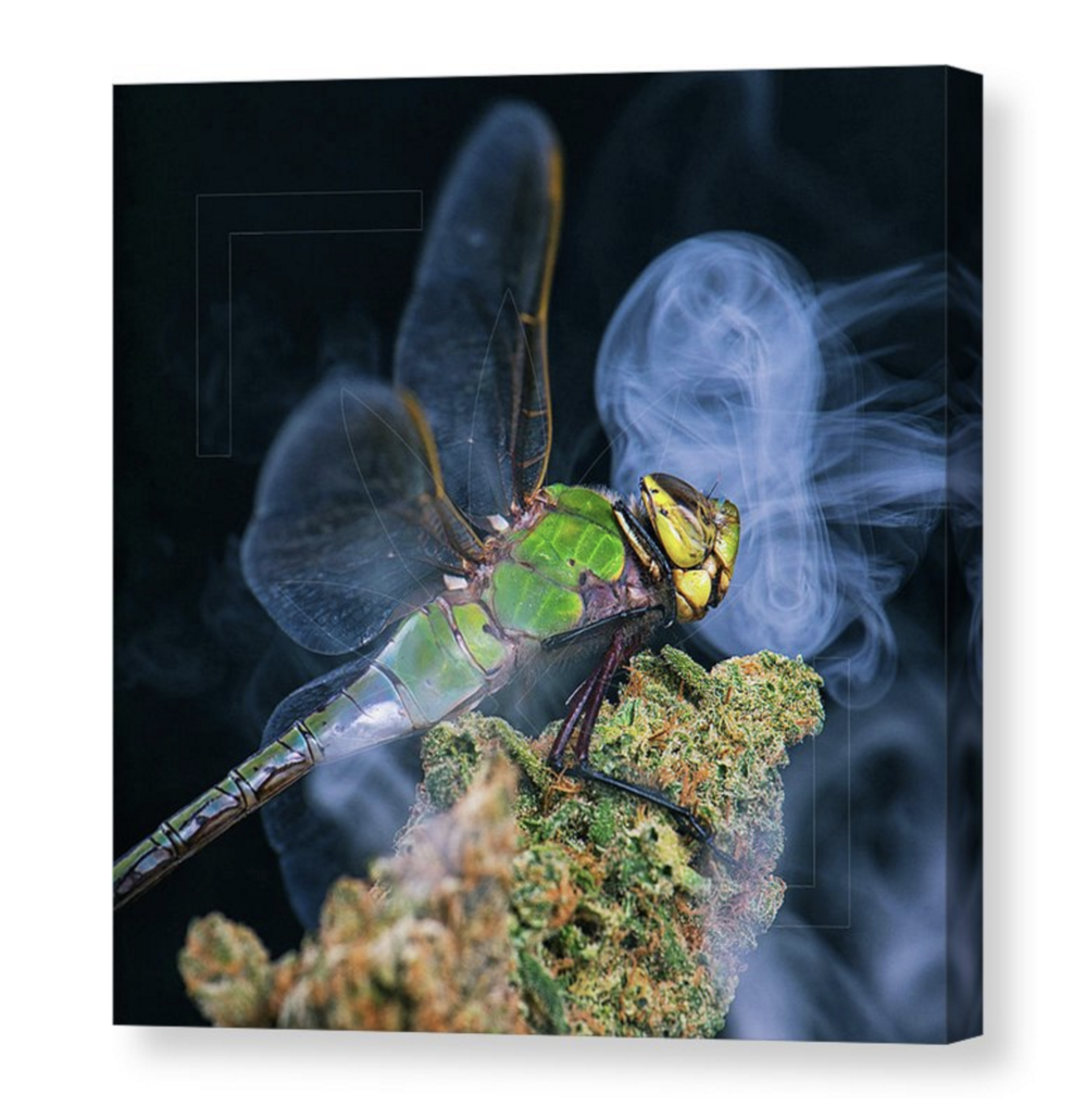 """Tuna Fly"" Canvas / $70 - $150"