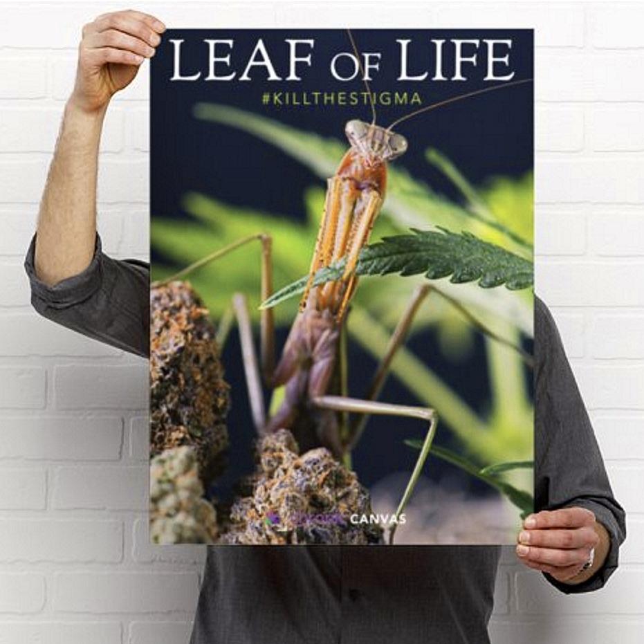 Leaf of Life Poster / $25 - $35