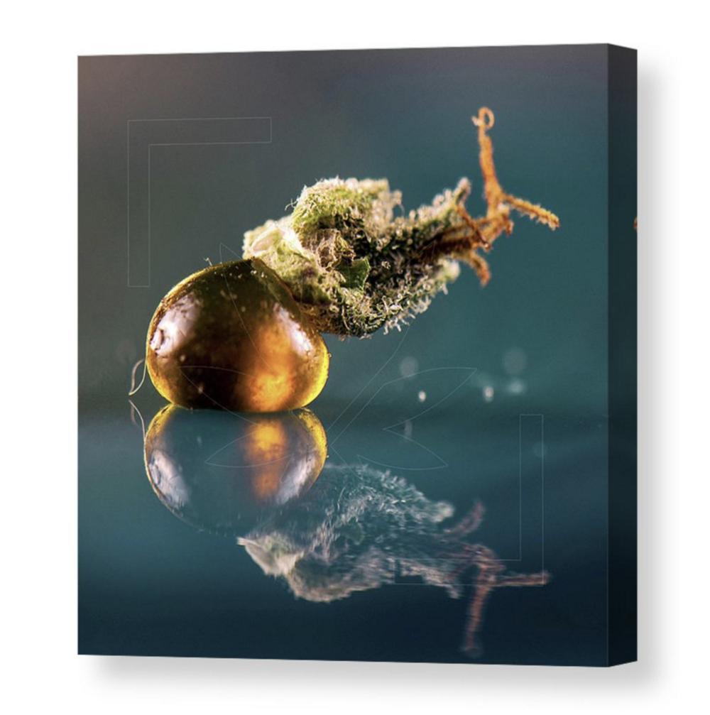 """The Snail"" Canvas / $70 - $150"