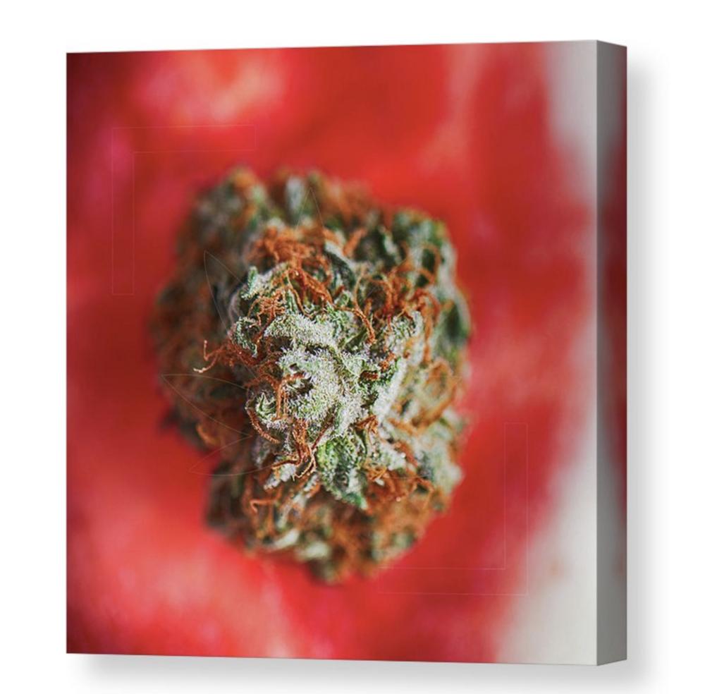 """Buddermelon"" Canvas / $70 - $150"