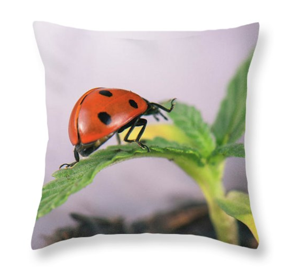 Lady Sprout Pillow  /  $35