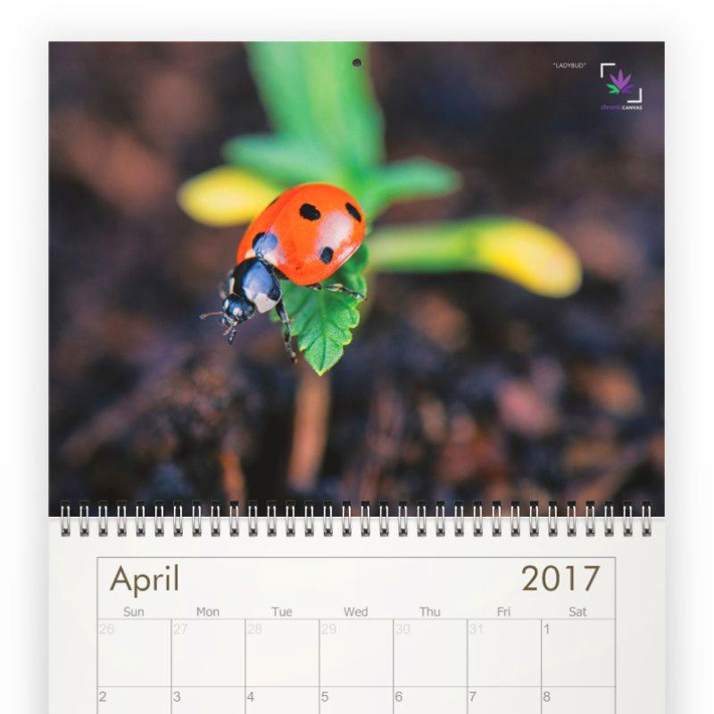 Chronic Canvas Classic Wall Calendar 2017 / $25