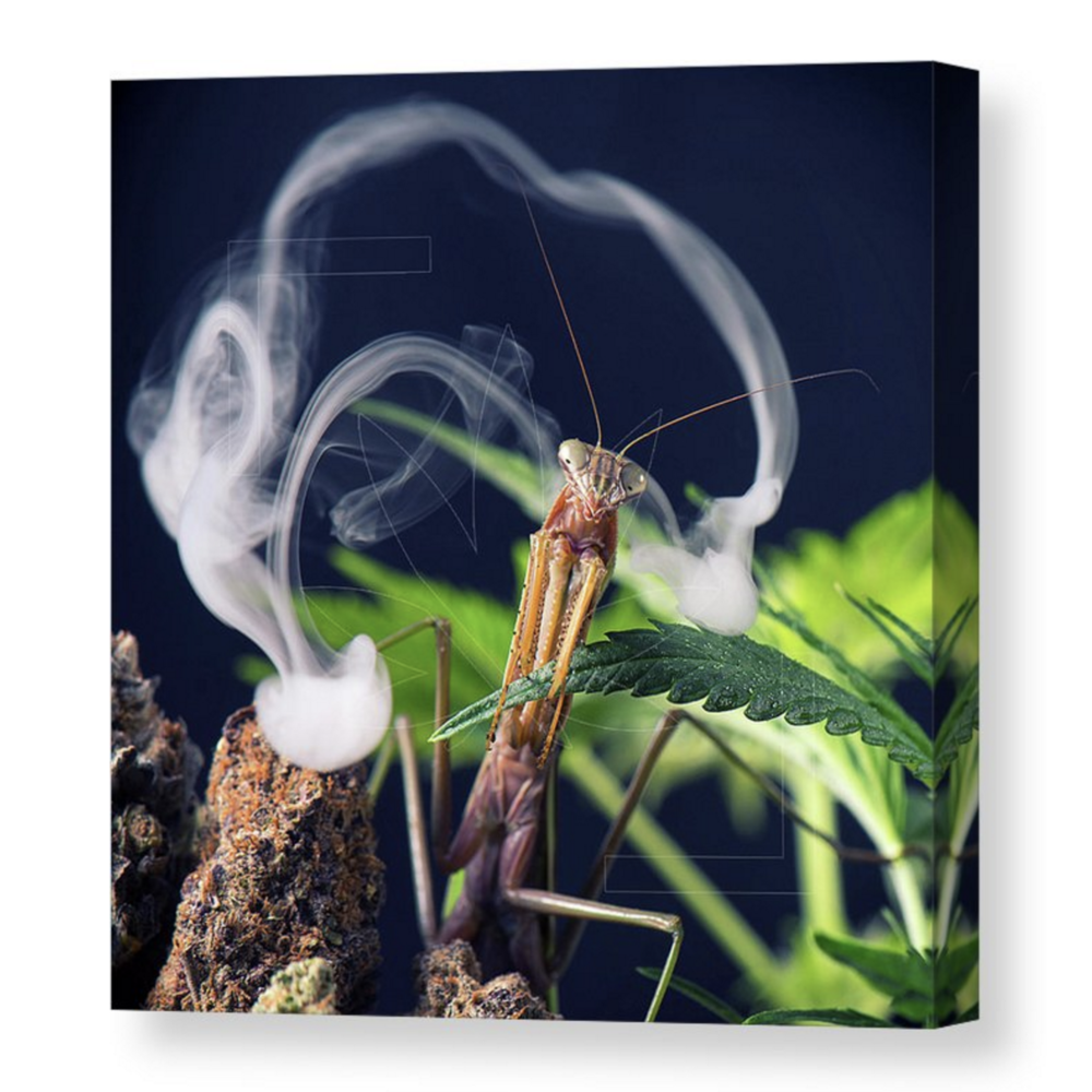 """""""Mantis Clouds""""Canvas / $70 - $150"""