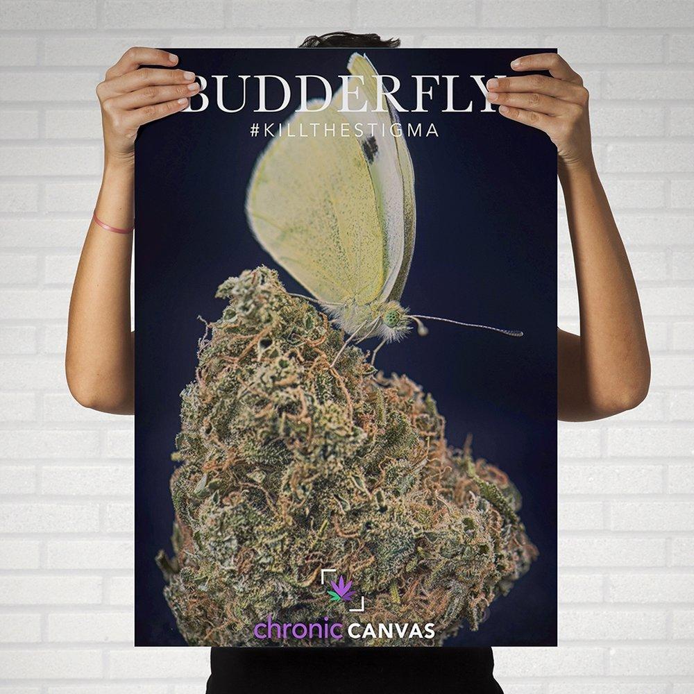 Budderfly Poster / $25 - $35