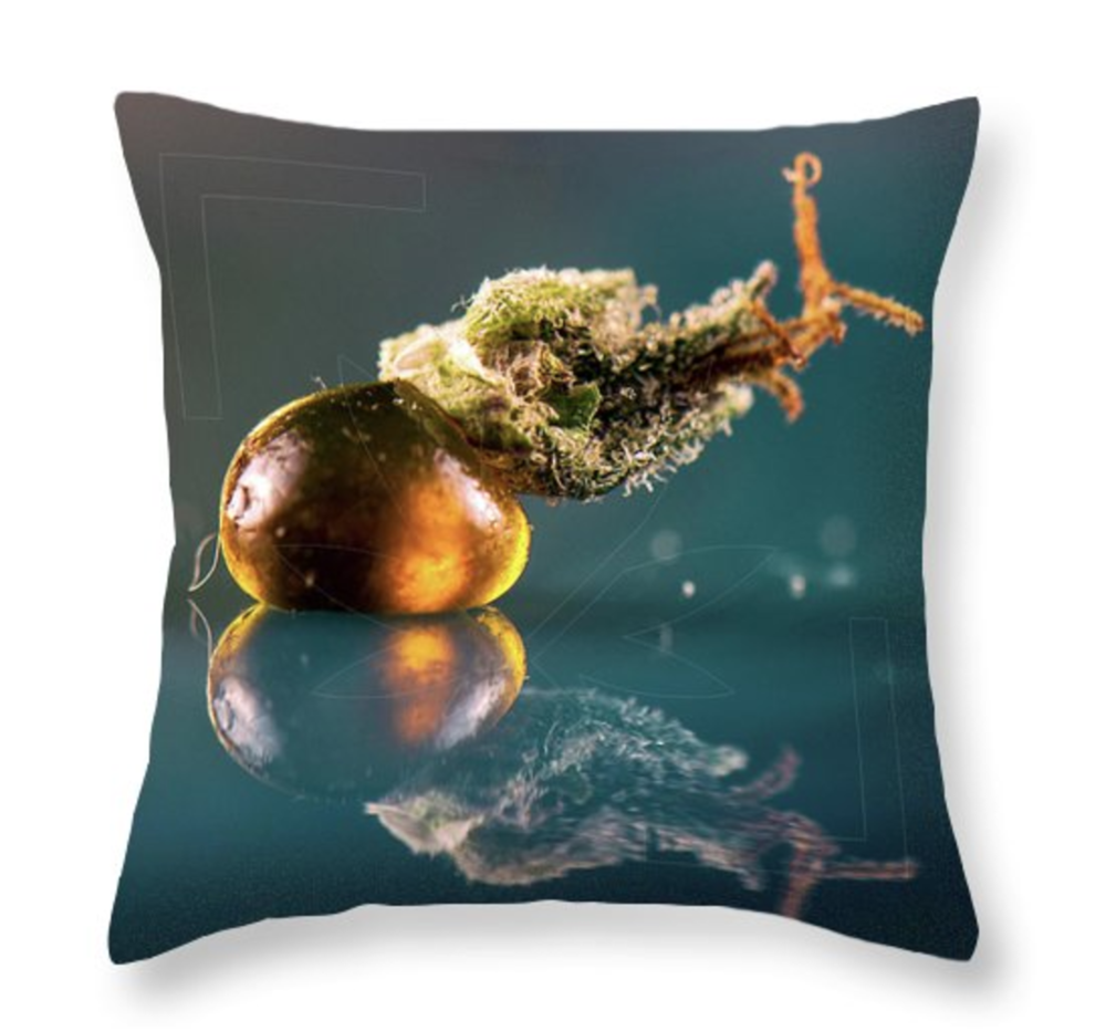 The Snail Pillow  /  $35