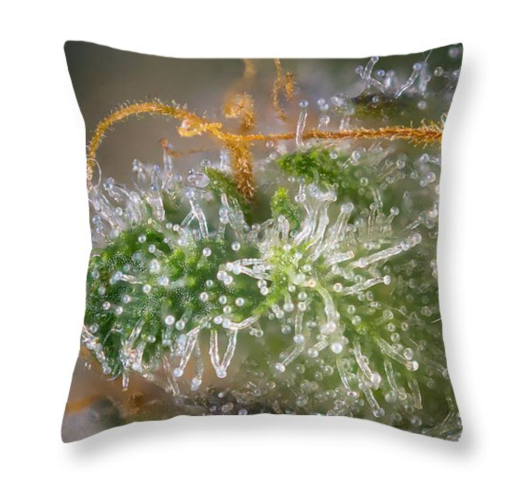 THC-pillow-front.png