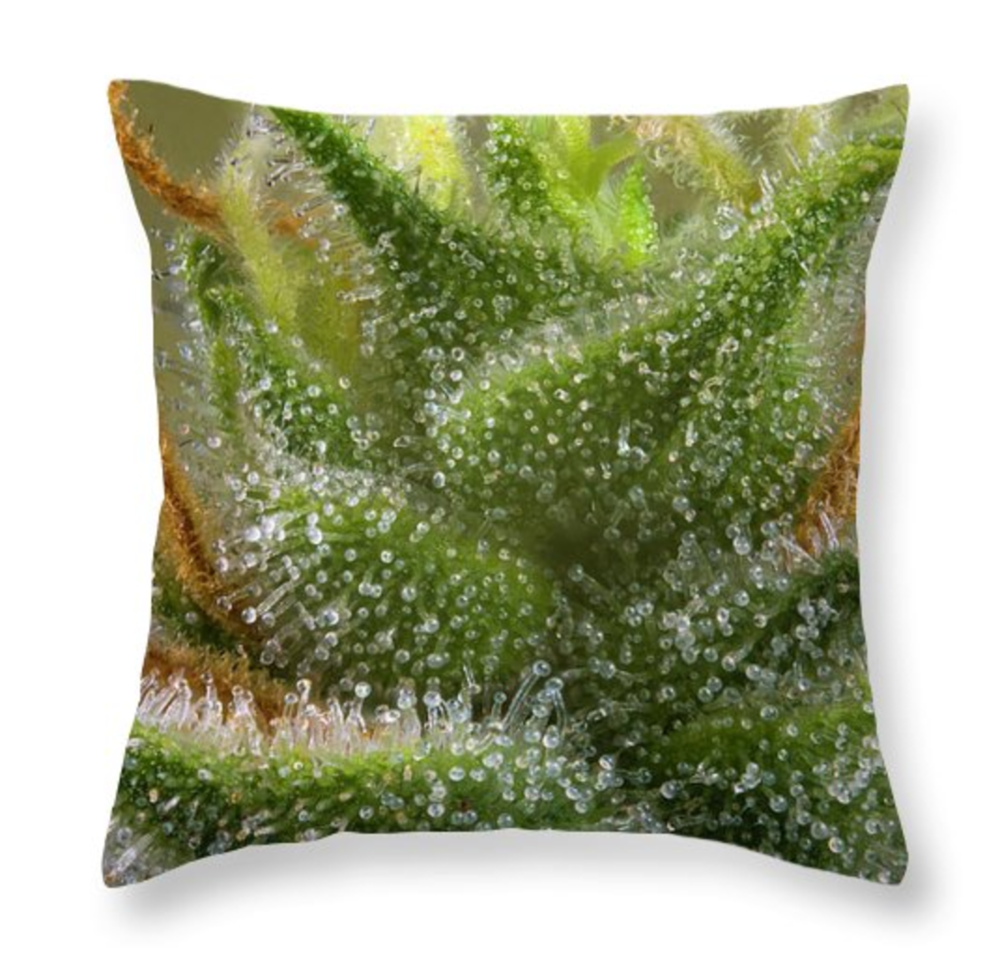 TriCombs Pillow  /  $35