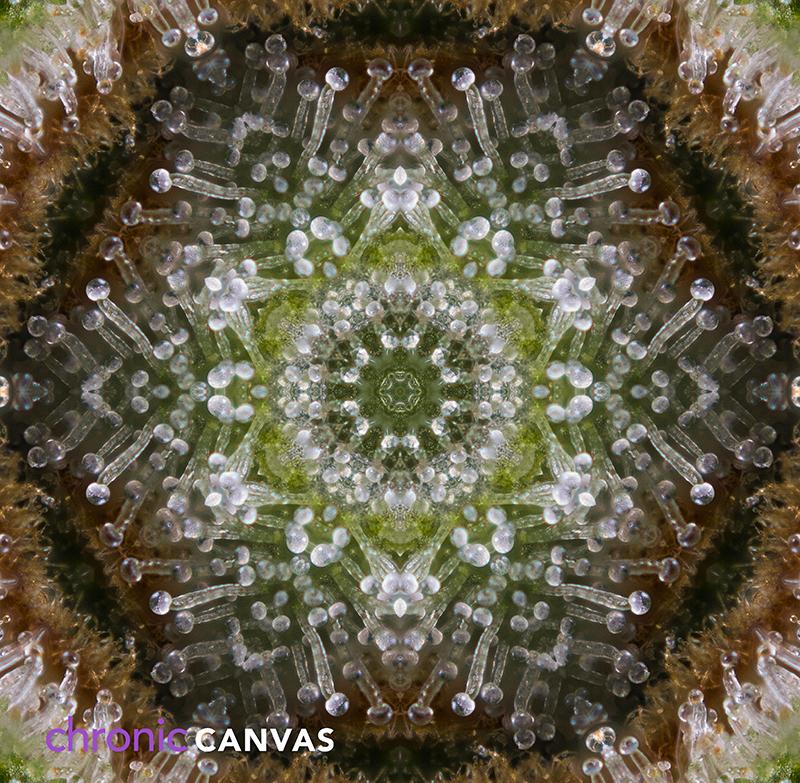 trichome-mandala-scarf-pattern-small.jpg