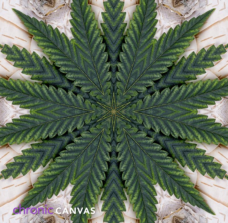 canna-star-scarf-pattern-small.jpg