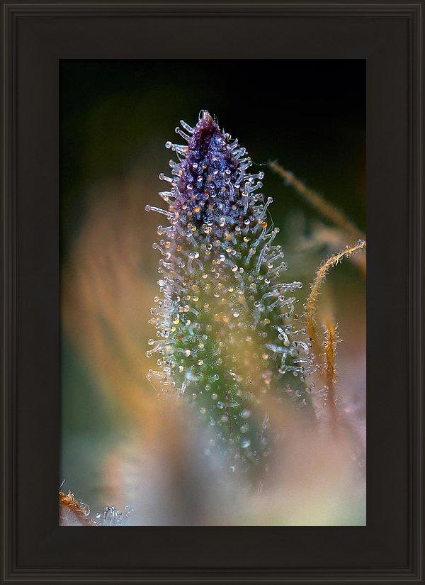 amberlicious-framed.jpg