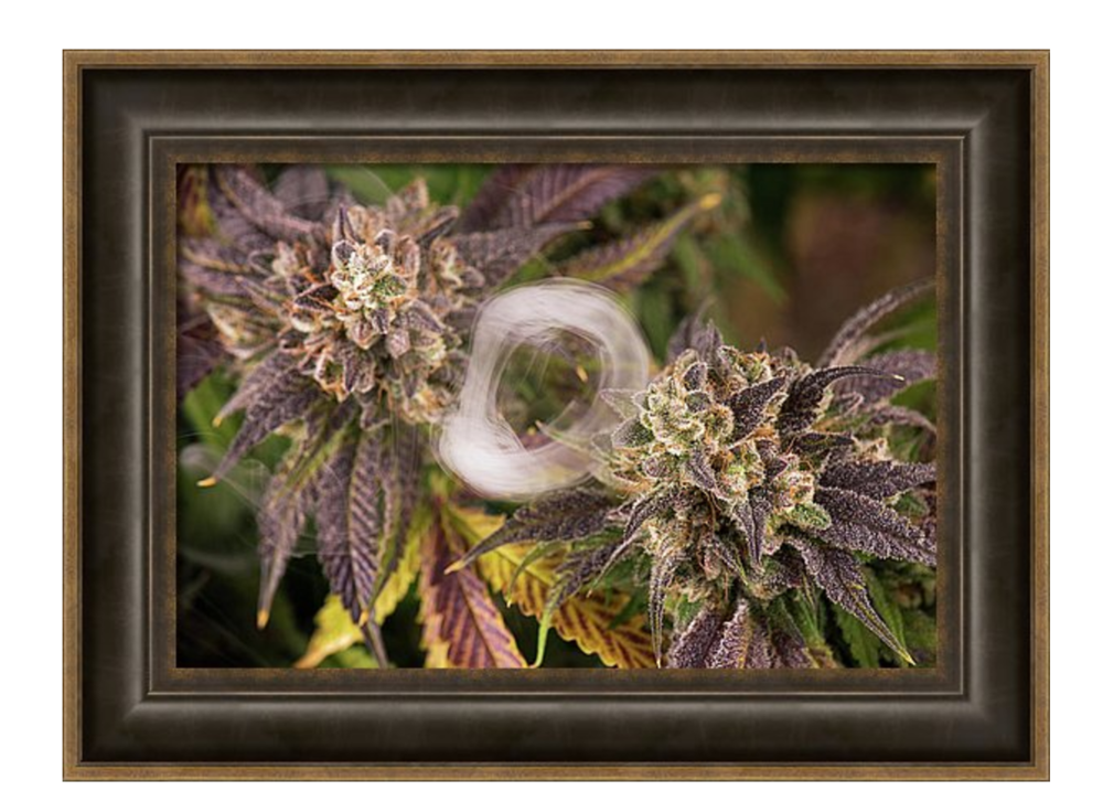 twin purps framed.png
