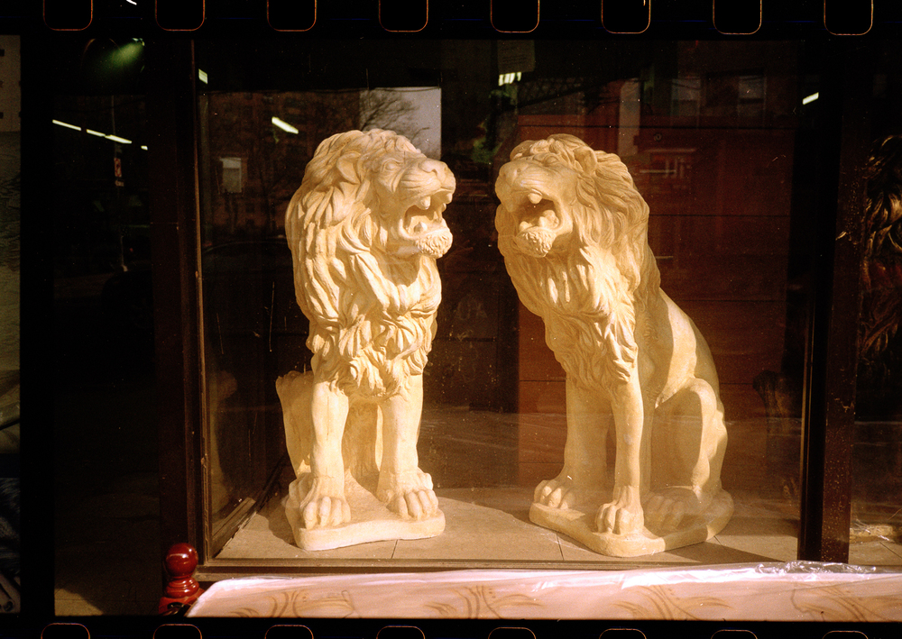 006Two_Lions.jpg