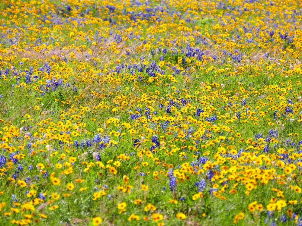 wildflowerstx