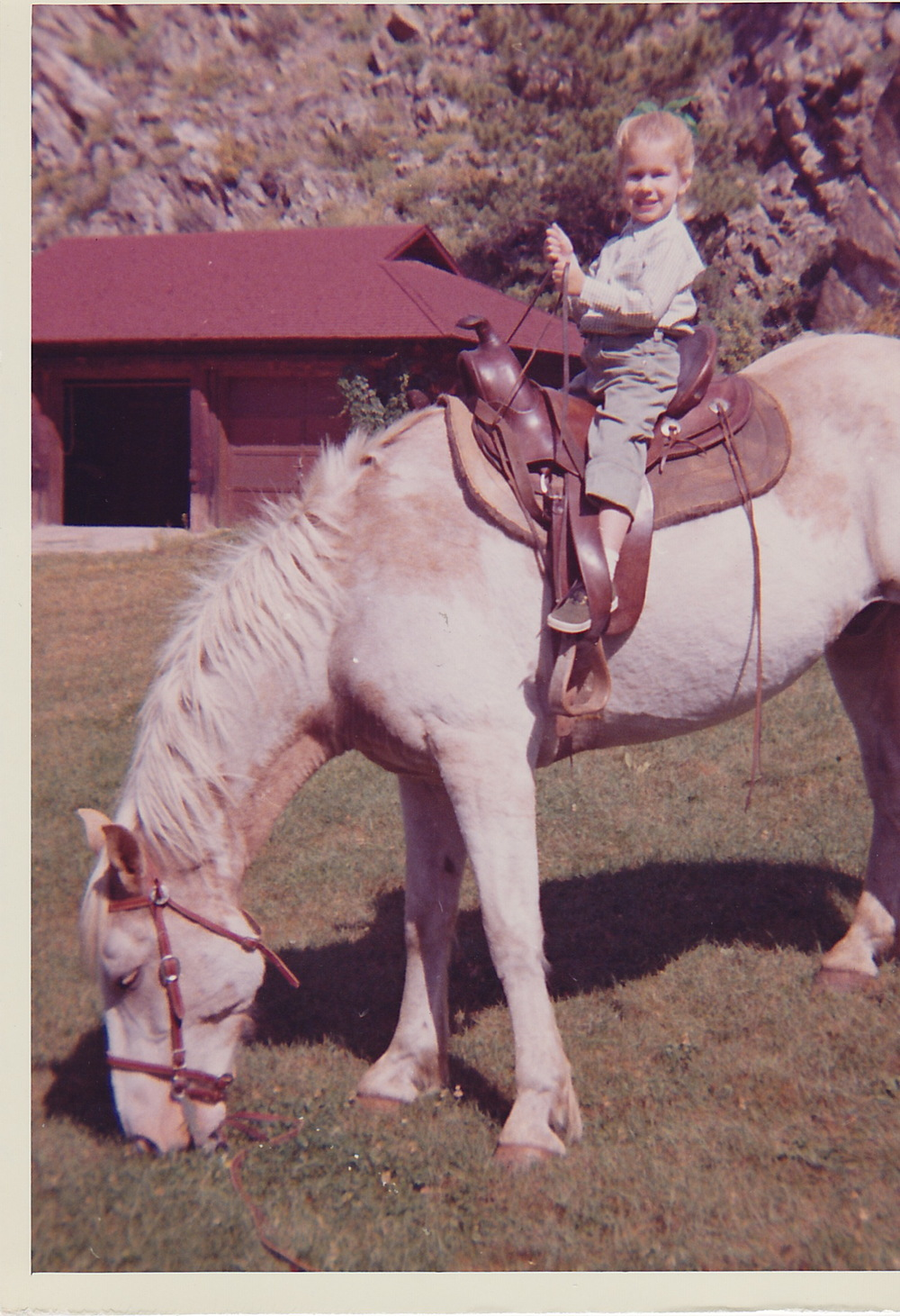 """My"" horse -- Sunny Maitland (Take a close look at the ""reins""!!)"