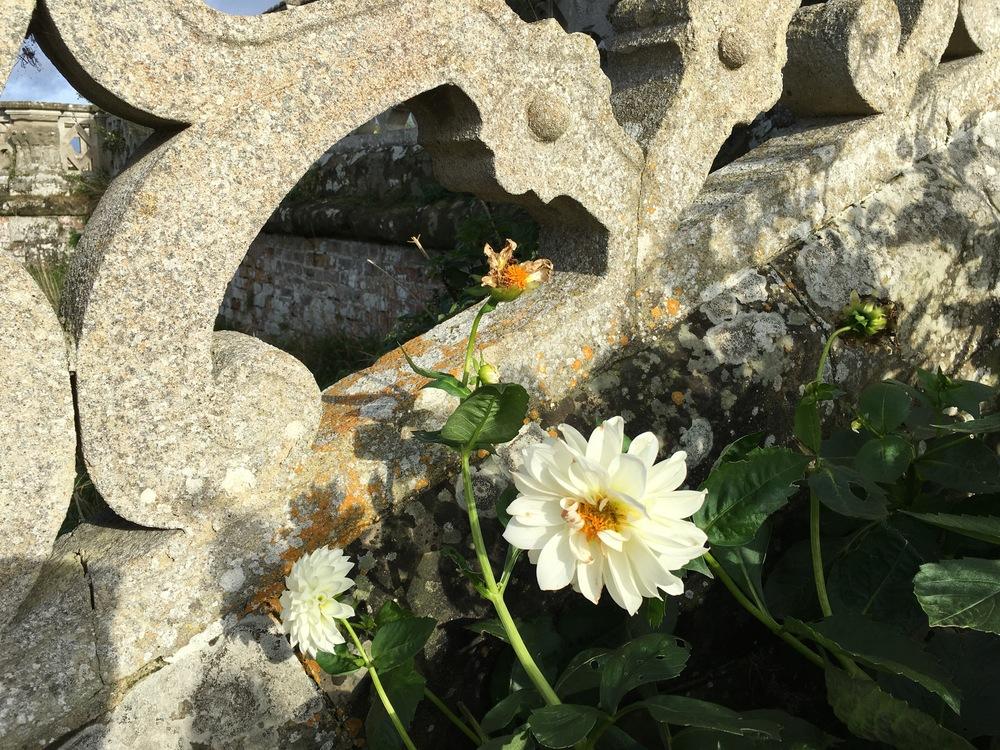 englandflower