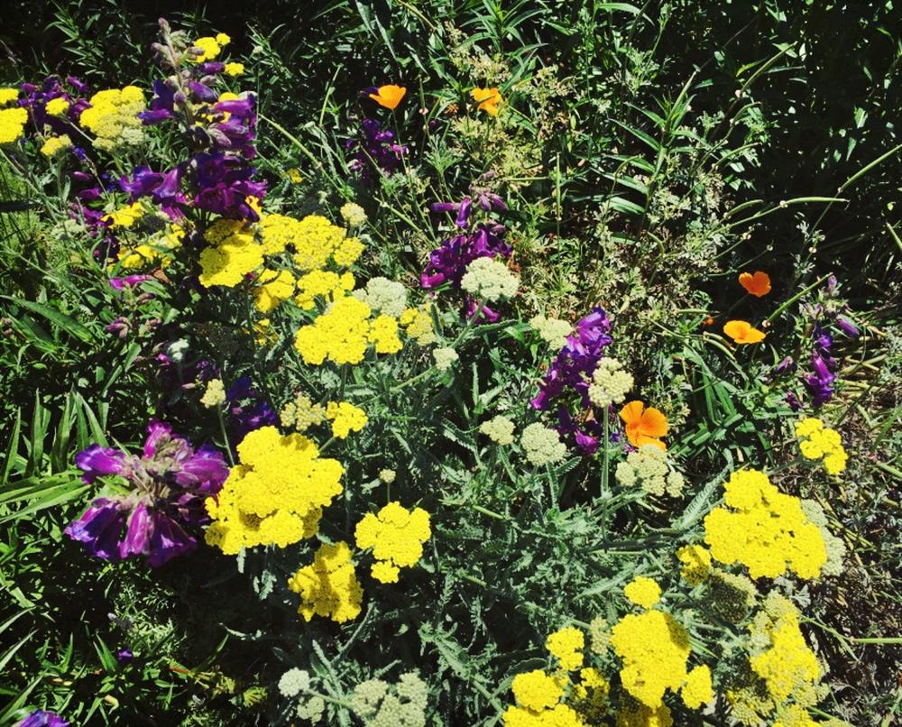 huntingtonwildflowers
