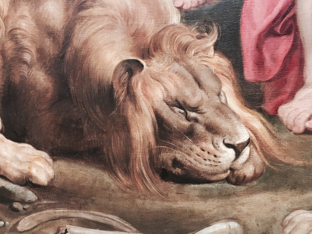 "This close up of a lion from Rubens' Daniel in the Lions Den reminded me of my childhood. I came out of Sunday School one day to announce that I knew why the lions had not eaten Daniel. It was, I told my parents, because they were ""God's perfect lions"". Forever after, all of our animals, and all animals, in fact, became God's perfect pug or alligator or giraffe. So I smiled when I saw Rubens' version of God's perfect lion."