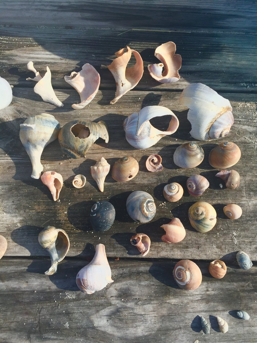Beach Treasures: Every day I gathered, and every day I came back and laid them out in wonder. My beach treasures!