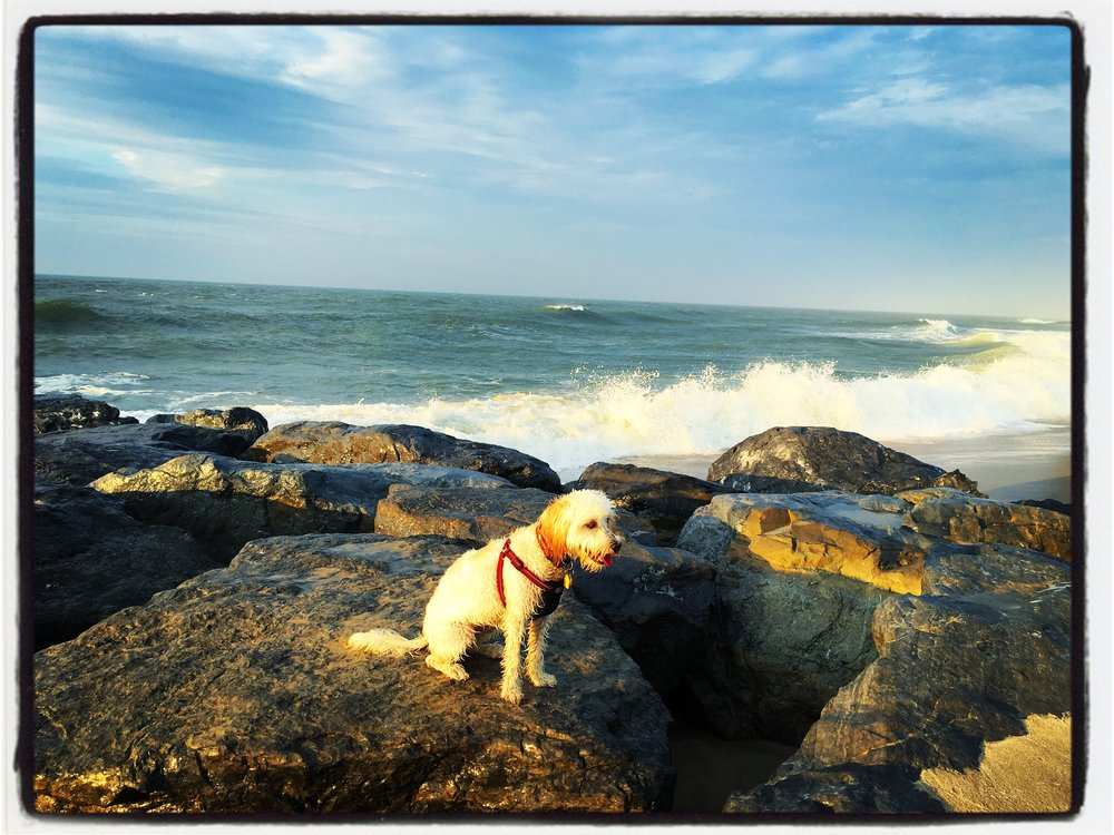 Golden Light: Allie loves rocks. I love Allie on rocks. This photo makes me happy!