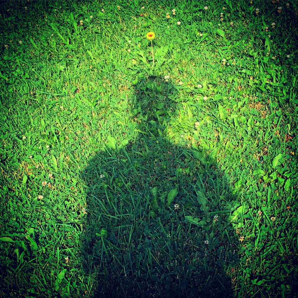 DandelionShadow.JPG