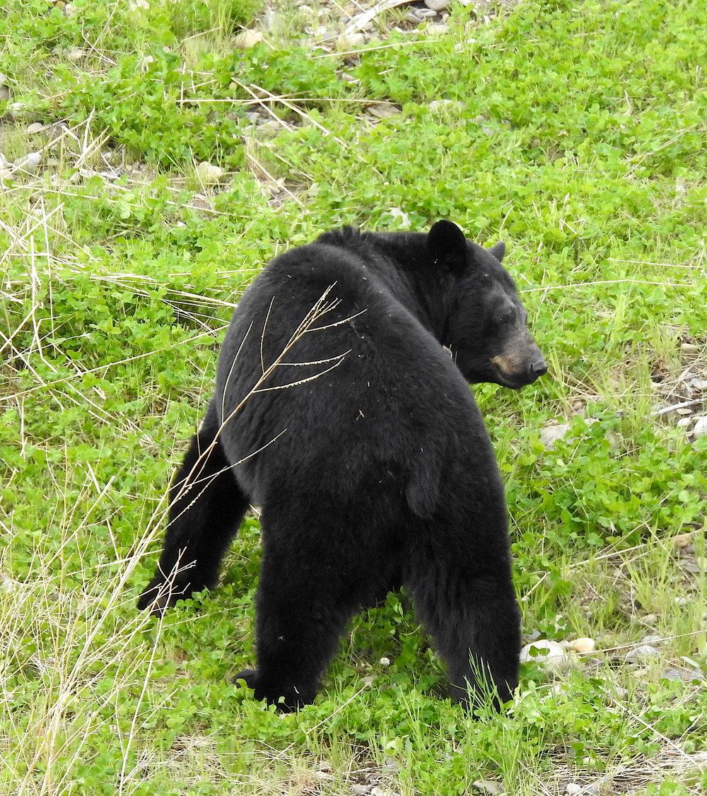 BearButt.jpeg