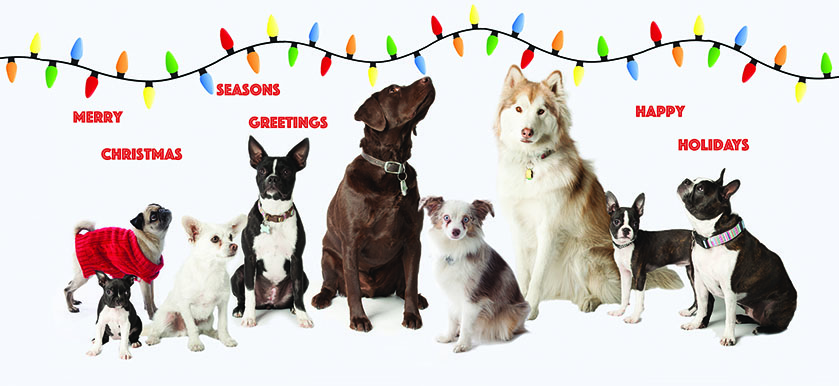 SOme of the dogs from the Dogs of Downtown Calendar