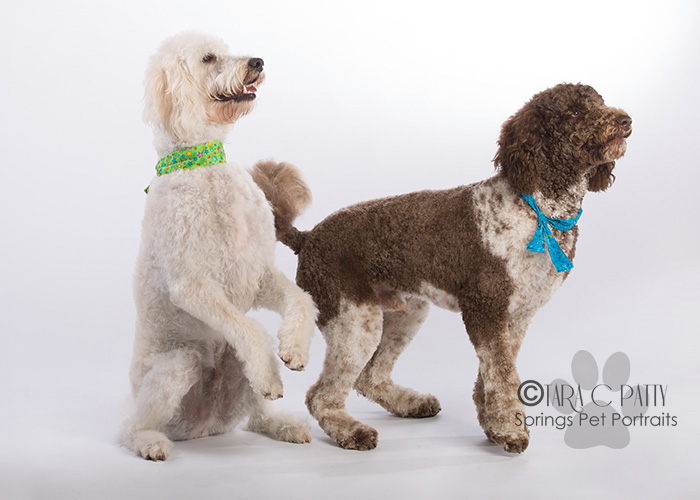 well-trained-dogs-Colorado-Springs-dog-photographer.jpg
