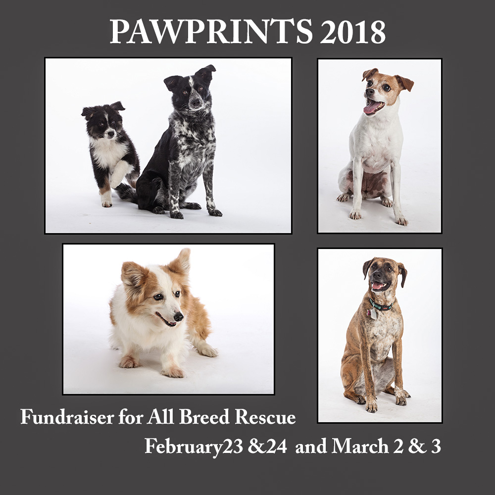 Pawprints-fundraiser-for-all-breed-rescue-Colorado Springs.jpg